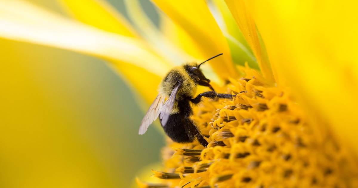 夢 占い 蜂 に 刺され た 夢占いで蜂の夢の意味!蜂に刺される夢など20選 心理学ラボ
