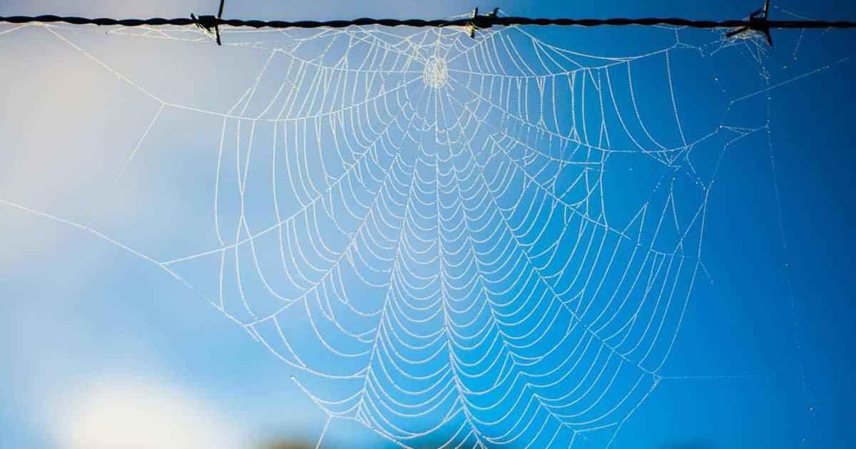 の 巣 蜘蛛