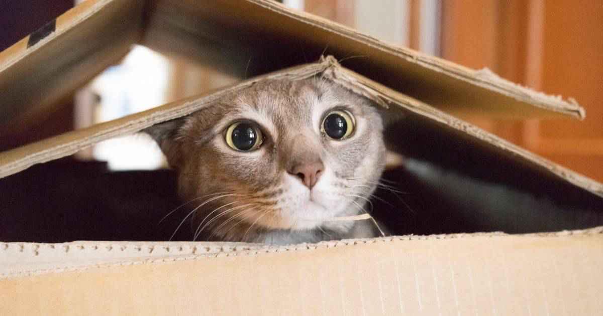 な つく 野良猫 野良猫まとめ!普段どんな生活をしている?勝手に飼っていいの?なつかせるコツも紹介!